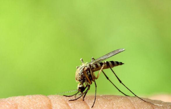 8 cách loại bỏ vết muỗi đốt và đánh bại cơn ngứa khó chịu - Ảnh 1.