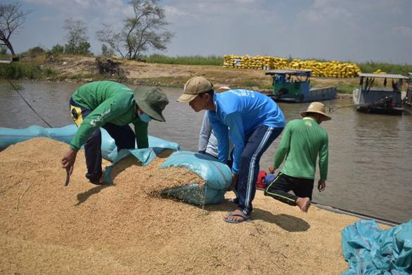 Ông Lê Minh Hoan: Cần chiến lược dài hạn cho hạt gạo Đồng bằng thay vì giải cứu - Ảnh 2.