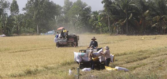 Ông Lê Minh Hoan: Cần chiến lược dài hạn cho hạt gạo Đồng bằng thay vì giải cứu - Ảnh 3.