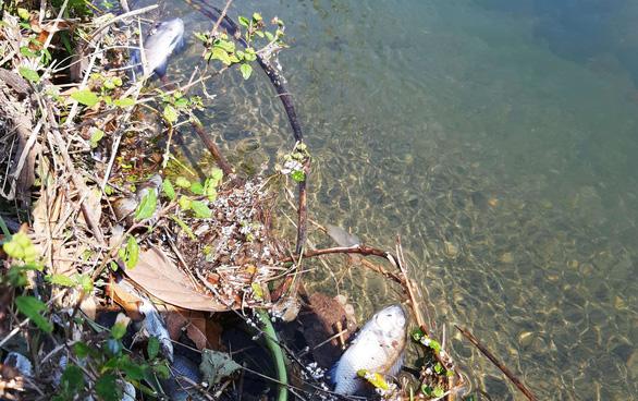 Kênh xuất hiện bọt trắng xóa như xà phòng, cá chết la liệt - Ảnh 4.