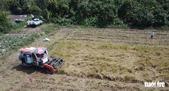 Đối sách các nước tiêu dùng thay đổi, gạo Việt gặp áp lực - Ảnh 3.