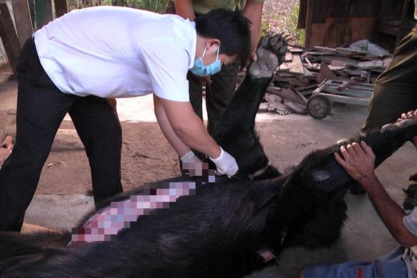 Xác minh nguyên nhân 4 con gấu ngựa nuôi nhốt chết bất thường - Ảnh 1.