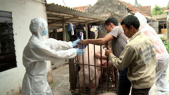 Chủ động hỗ trợ giá lợn tiêu hủy để chống dịch tả lợn châu Phi - Ảnh 1.