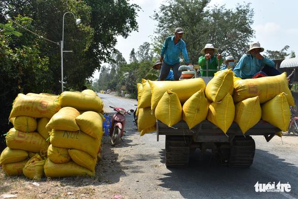 Nông dân khốn khổ vì doanh nghiệp bẻ kèo thu mua lúa - Ảnh 5.