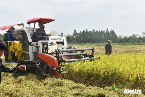 Nông dân khốn khổ vì doanh nghiệp bẻ kèo thu mua lúa - Ảnh 4.