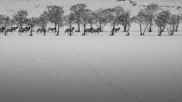 24 Frames - Lời giã biệt đầy chất thơ của Abbas Kiarostami - Ảnh 6.