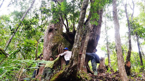 Tây Giang gìn giữ rừng xanh - Kỳ 5: Đội kiểm lâm làng - Ảnh 1.