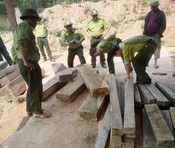 Kiểm tra vụ phá rừng ở Vườn quốc gia Phong Nha - Kẻ Bàng - Ảnh 1.
