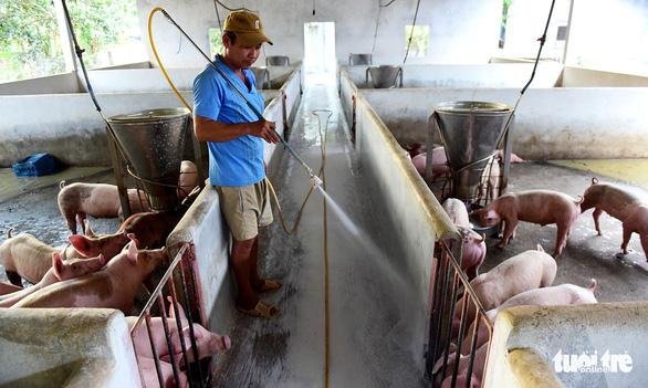 Chao đảo thị trường thịt heo 10 tỉ USD - Ảnh 1.