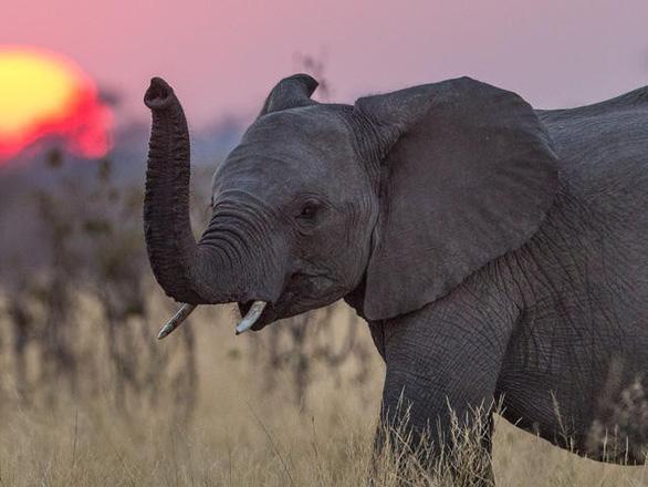 Thế giới xem các con vật nào là biểu tượng may mắn? - Ảnh 6.