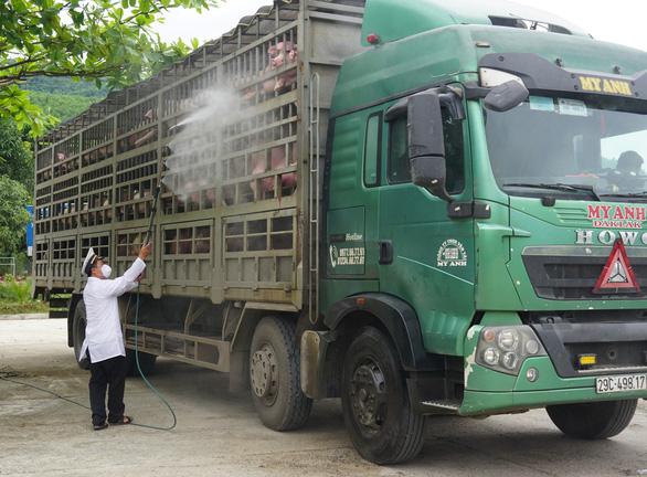 Dịch tả heo châu Phi lan tới Thừa Thiên - Huế, giám sát chặt xe chở heo vào Nam - Ảnh 3.