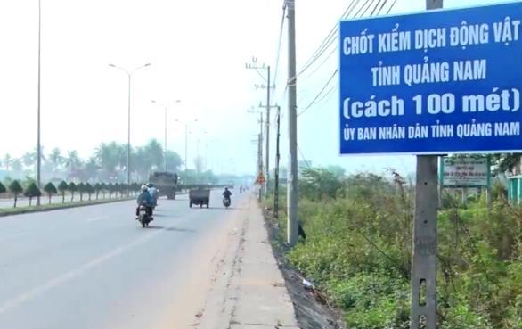 Xe chở heo trên cao tốc Đà Nẵng - Quảng Ngãi phải đi sang quốc lộ 1 - Ảnh 2.