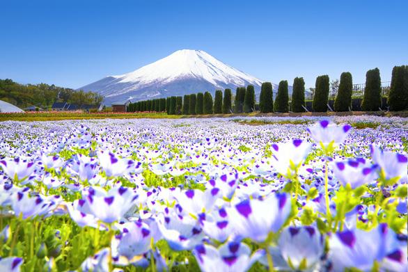 Tour tháng 5 tham dự sự kiện trọng đại của Nhật Bản - Ảnh 3.