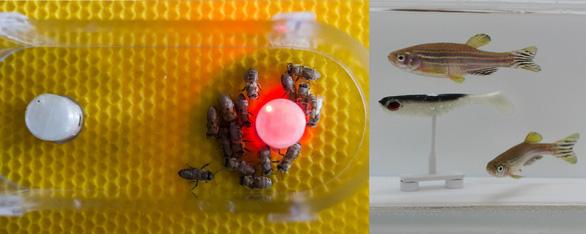 Không tin nổi khi ong và cá từ nay có thể trò chuyện, cãi vã nhau - Ảnh 3.