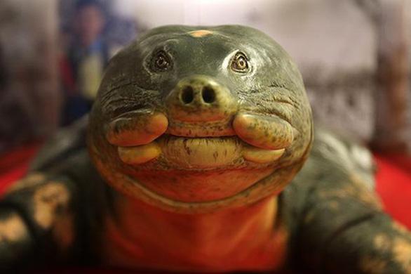 Tiêu bản giống như thật của cụ rùa Hồ Gươm - Ảnh 5.