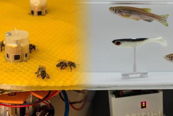 Không tin nổi khi ong và cá từ nay có thể trò chuyện, cãi vã nhau - Ảnh 2.
