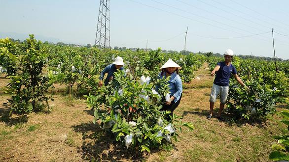 Người lập trang trại cây trái thênh thang giữa ruộng đồng trũng thấp  - Ảnh 2.