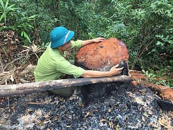 Lại xảy ra phá rừng quy mô lớn ở Quảng Bình - Ảnh 3.