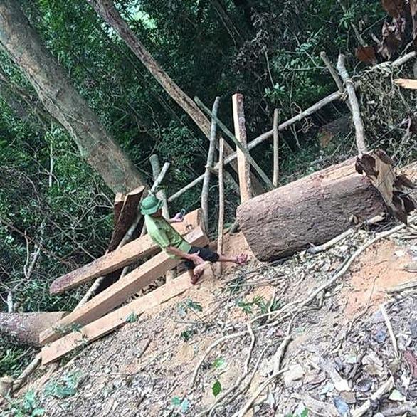 Lại xảy ra phá rừng quy mô lớn ở Quảng Bình - Ảnh 1.