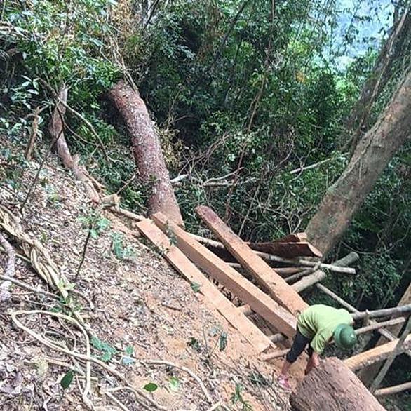 Lại xảy ra phá rừng quy mô lớn ở Quảng Bình - Ảnh 2.