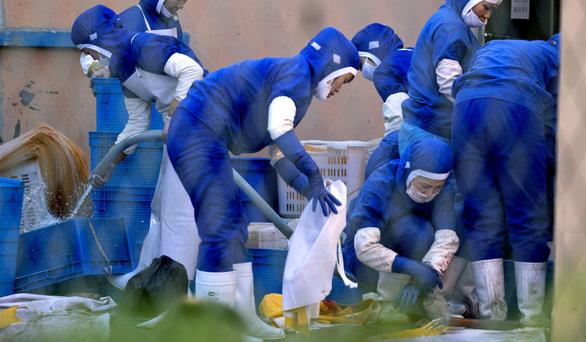 Nga và Trung Quốc hồi hương hàng chục ngàn lao động Triều Tiên - Ảnh 2.