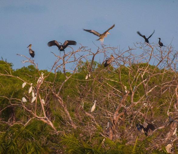 Cò nhạn quý hiếm trong Sách đỏ lần đầu về Vườn chim Bạc Liêu - Ảnh 1.