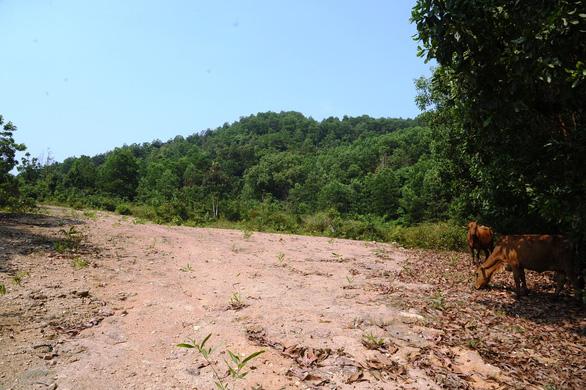 Ba Vàng từng khởi công xây chùa ở Quảng Nam rồi… mất hút - Ảnh 4.