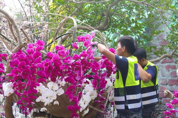 20.000 cành hoa anh đào khoe sắc tại vườn hoa Lý Thái Tổ - Ảnh 6.
