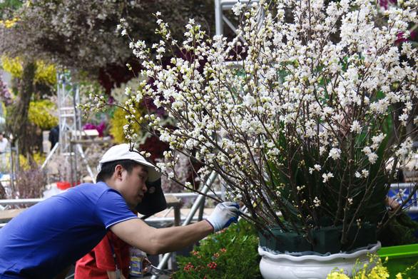20.000 cành hoa anh đào khoe sắc tại vườn hoa Lý Thái Tổ - Ảnh 5.