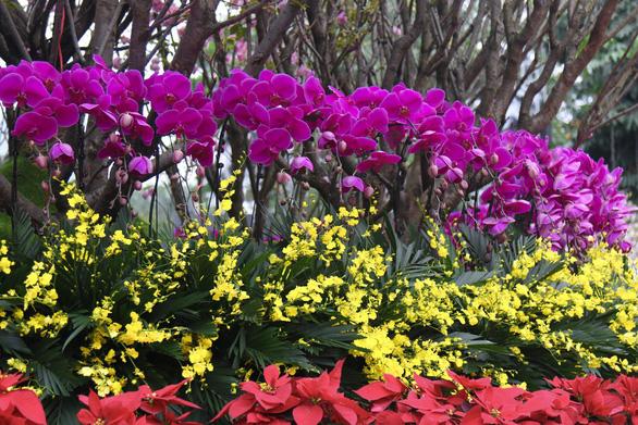 20.000 cành hoa anh đào khoe sắc tại vườn hoa Lý Thái Tổ - Ảnh 13.