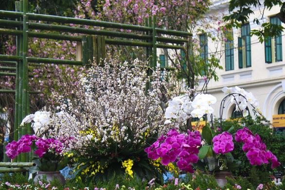 20.000 cành hoa anh đào khoe sắc tại vườn hoa Lý Thái Tổ - Ảnh 11.