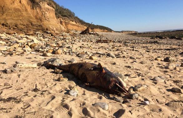 Khủng hoảng sinh thái tại Pháp, 1.100 con cá heo chết chỉ trong 3 tháng - Ảnh 4.