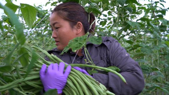 Không quốc tịch, cô dâu Việt ở Đài Loan nhìn con bị đưa vào trại mồ côi - Ảnh 2.