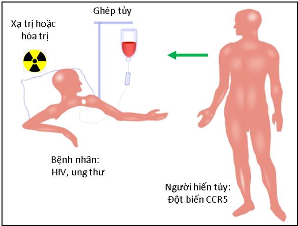 Chữa hết HIV nhờ người đột biến gen