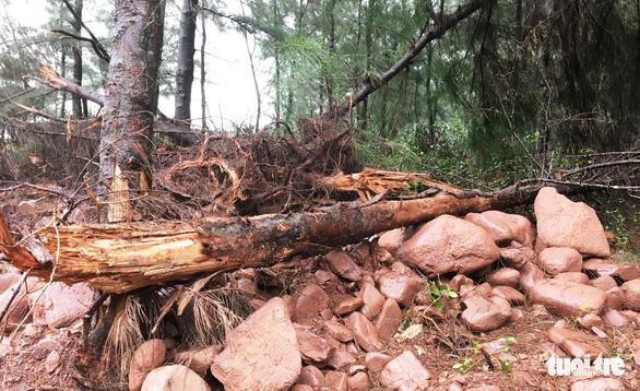 Dân 'vây' dự án nuôi tôm phá cả rừng phòng hộ ven biển - Ảnh 8.