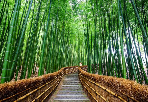 Rộn ràng Đại Lễ - Vi Vu Osaka (Nhật Bản) Bằng Chuyên Cơ - Ảnh 3.