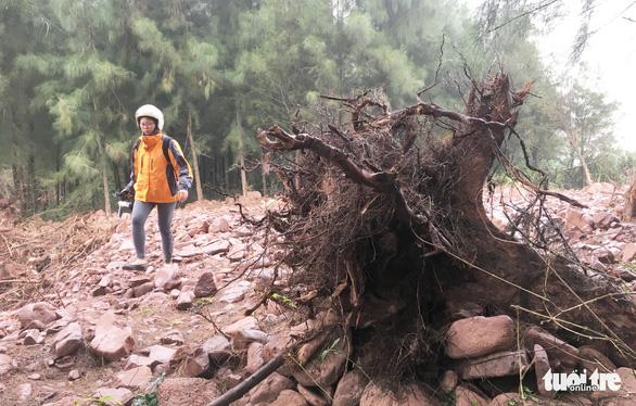 Chặt cây rừng phòng hộ làm dự án nuôi tôm là có thật - Ảnh 1.
