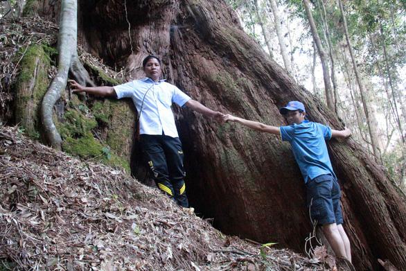 Tây Giang gìn giữ rừng xanh - Kỳ 3: Học thuyết giữ rừng của Bh'ríu Liếc - Ảnh 1.