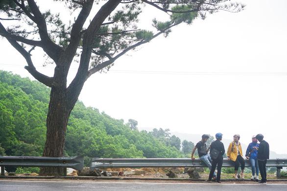 Thông cô đơn trên đèo Hải Vân nhiều bạn trẻ check-in là cổ thụ thời Pháp? - Ảnh 7.