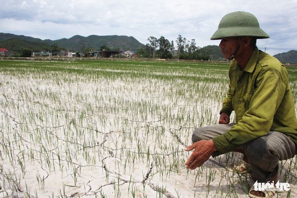 Cách chức một chủ tịch xã 'ăn chặn' tiền hỗ trợ lúa bệnh - Ảnh 1.