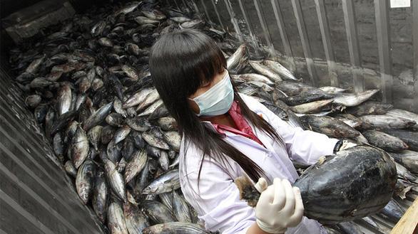 Hàn Quốc kháng cáo thành công Nhật Bản tại WTO vụ kiện thủy hải sản - Ảnh 1.