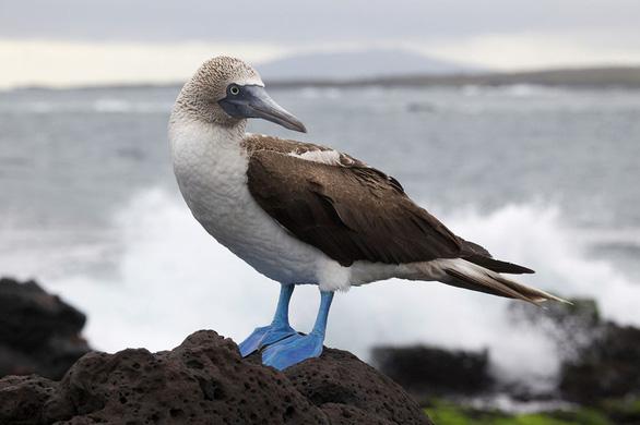 Quần đảo thế giới khác với những sinh vật không nơi đâu có - Ảnh 10.