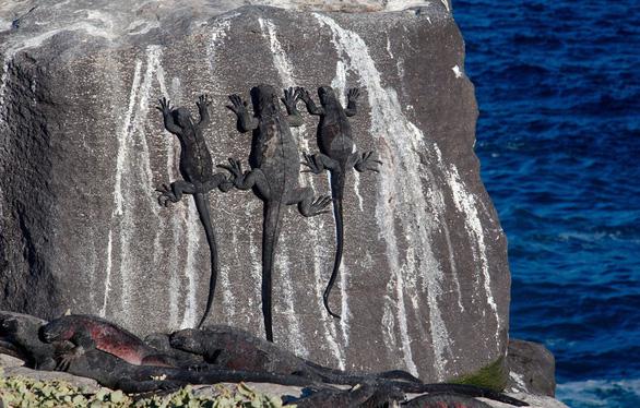 Quần đảo thế giới khác với những sinh vật không nơi đâu có - Ảnh 6.