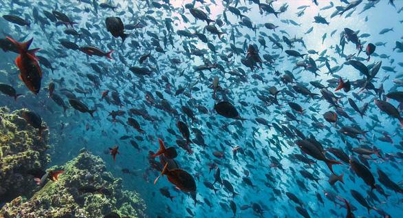 Quần đảo thế giới khác với những sinh vật không nơi đâu có - Ảnh 2.