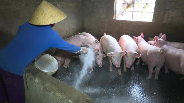 Việt Nam có kết quả bước đầu về văcxin chống dịch tả heo châu Phi - Ảnh 2.