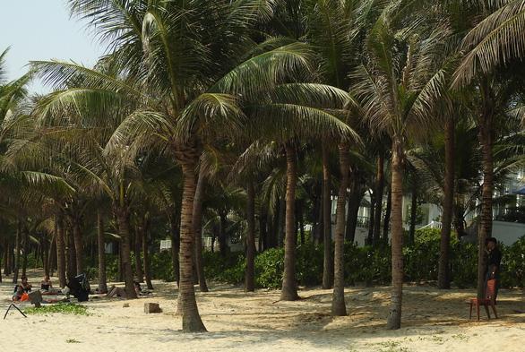 Tranh cãi quanh chuyện làm tuyến đường bêtông dọc bãi biển Đà Nẵng - Ảnh 4.