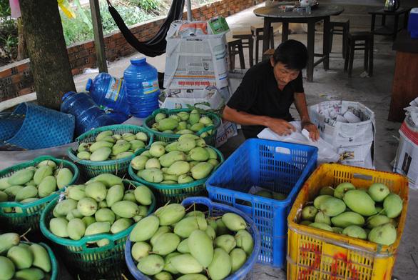 Lô xoài đầu tiên xuất khẩu từ Việt Nam sang Mỹ - Ảnh 2.
