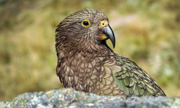 75% loài động thực vật tại New Zealand đã tuyệt chủng - Ảnh 1.