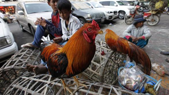 Campuchia phát hiện cúm gia cầm H5N6 tại tỉnh giáp Việt Nam - Ảnh 1.
