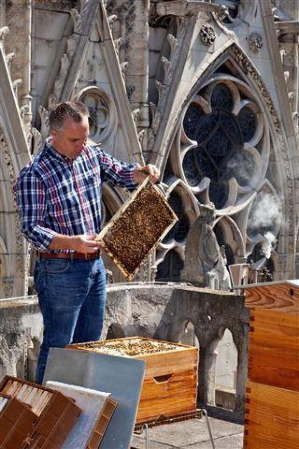 Lo lắng cho 180.000 con ong trên mái Nhà thờ Đức Bà Paris - Ảnh 1.